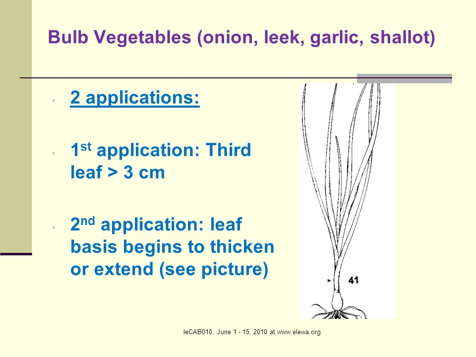 IeCAB010, June 1 - 15, 2010 at www.elewa.org Root and stem vegetables (carrot, chicory, radish,...) Stage of 1 st application Stage of 2 nd application 2 applications: 1 st application: Third leaf totally unfolded > 3 cm, 2 nd application: 20% of expected root diameter is reached (20 days later)