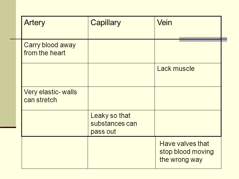ArteryCapillaryVein Carry blood away from the heart Lack muscle Very elastic- walls can stretch Leaky so that substances can pass out Have valves that stop blood moving the wrong way