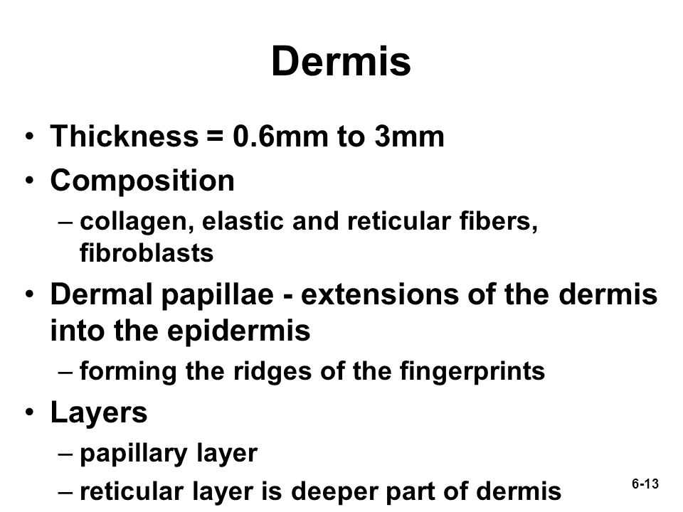 6-13 Dermis Thickness = 0.6mm to 3mm Composition –collagen, elastic and reticular fibers, fibroblasts Dermal papillae - extensions of the dermis into