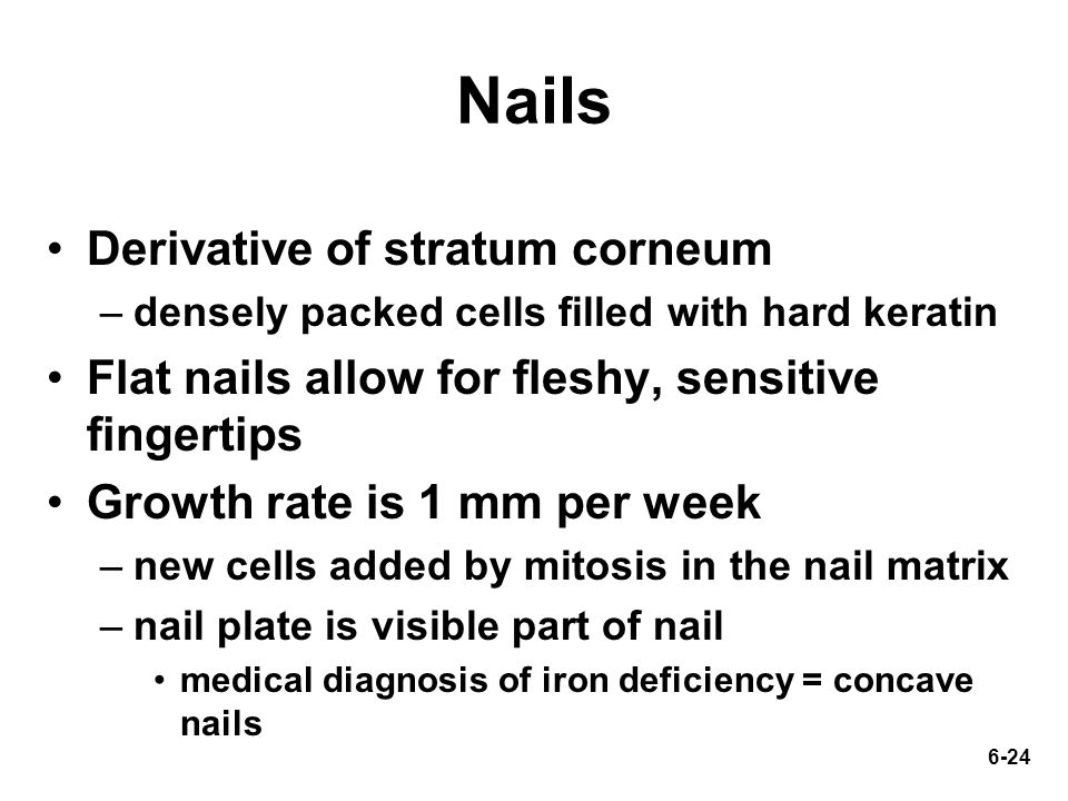 6-24 Nails Derivative of stratum corneum –densely packed cells filled with hard keratin Flat nails allow for fleshy, sensitive fingertips Growth rate