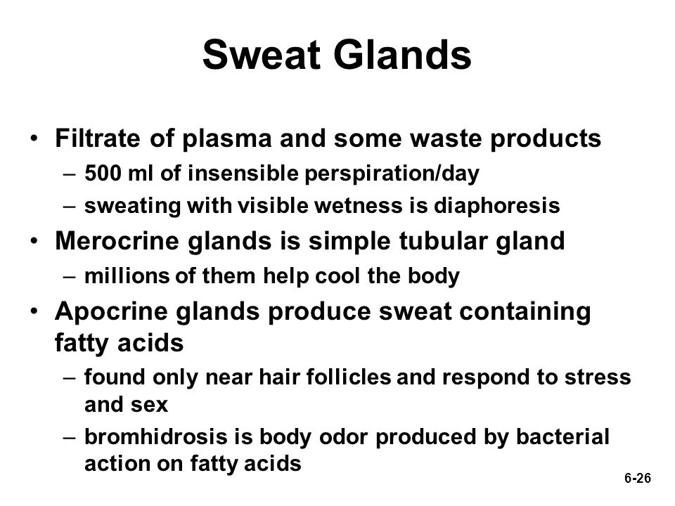 6-26 Sweat Glands Filtrate of plasma and some waste products –500 ml of insensible perspiration/day –sweating with visible wetness is diaphoresis Mero