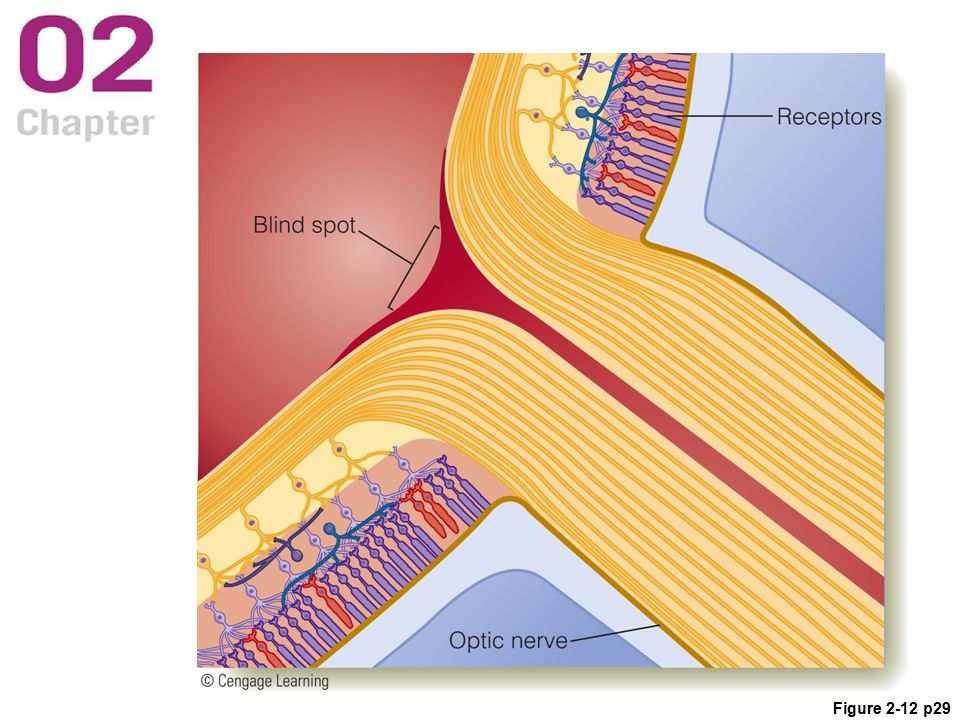 Figure 2-12 p29