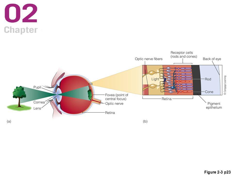 Figure 2-3 p23