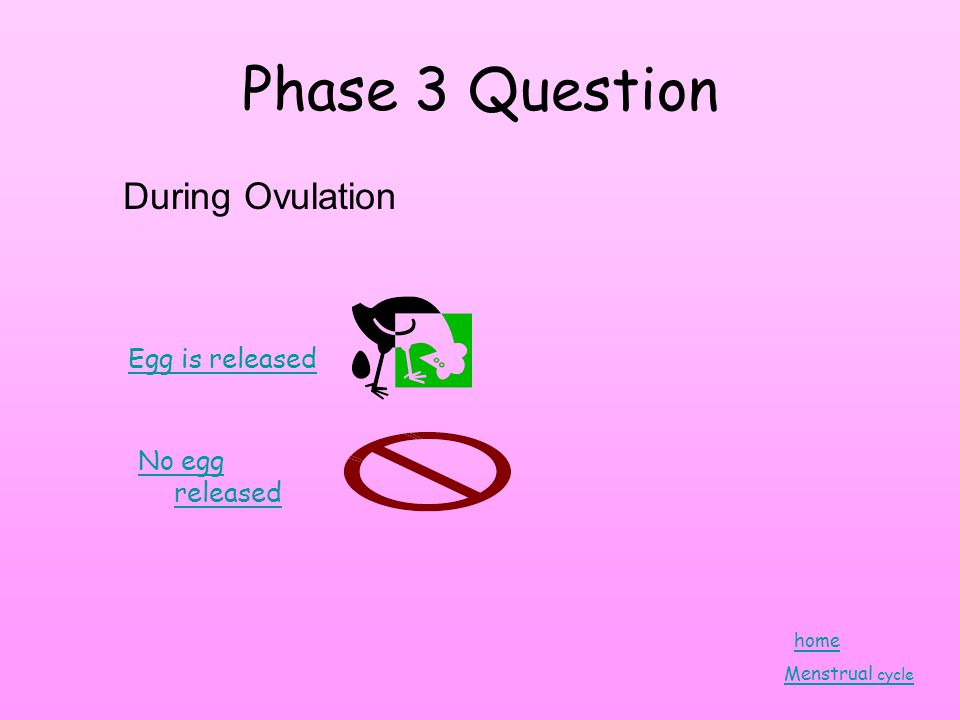 Phase 3 Question During Ovulation Egg is released No egg released home Menstrual cycle