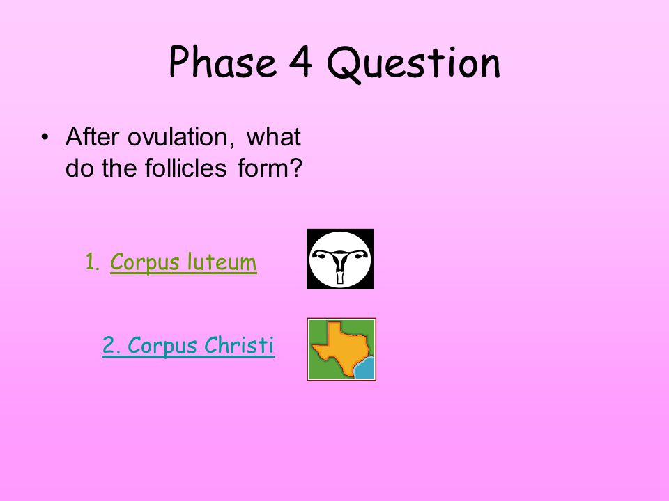 Phase 4 Question After ovulation, what do the follicles form 1.Corpus luteum 2. Corpus Christi