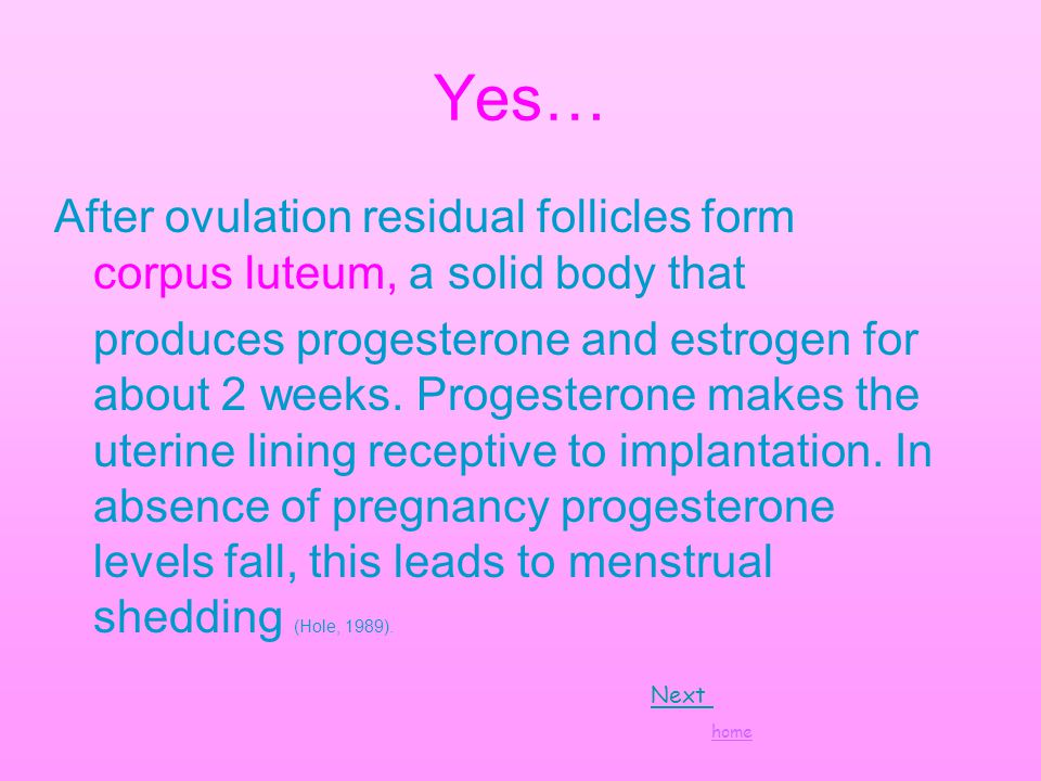 Yes… After ovulation residual follicles form corpus luteum, a solid body that produces progesterone and estrogen for about 2 weeks.