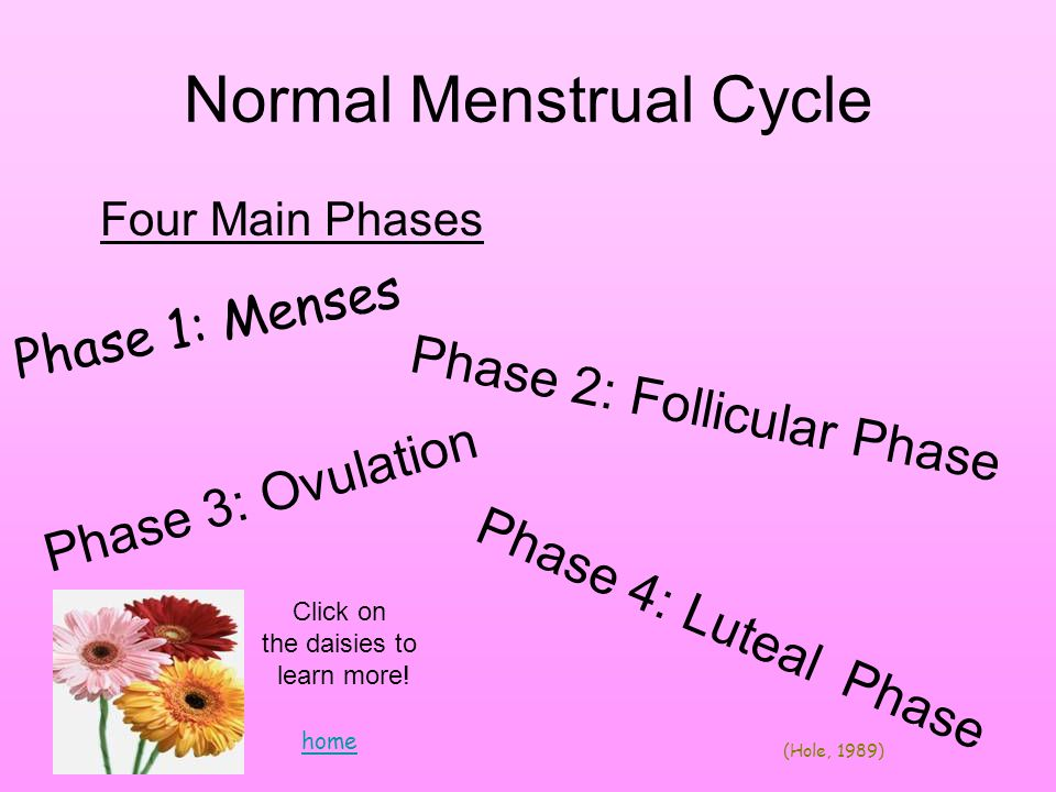 Normal Menstrual Cycle Four Main Phases Phase 1: Menses Phase 2: Follicular Phase Phase 3: Ovulation Phase 4: Luteal Phase Click on the daisies to learn more.