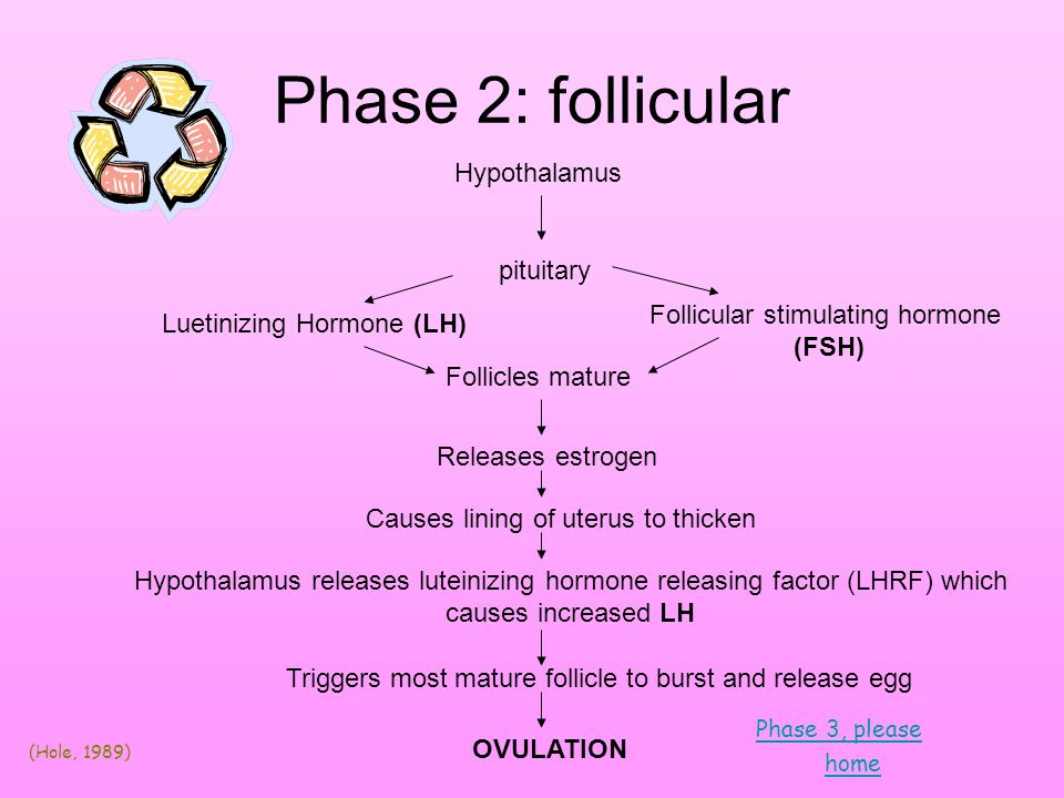 Phase 3: Ovulation Blood supply to ovary increases Ligaments contract pulling ovary closer to fallopian tube Surge of LH weakens ovary wall Egg released Cervix develops clear stringy mucous Facilitates movement of sperm toward egg Unfertilized egg dissolves in uterus Take me to phase 4.