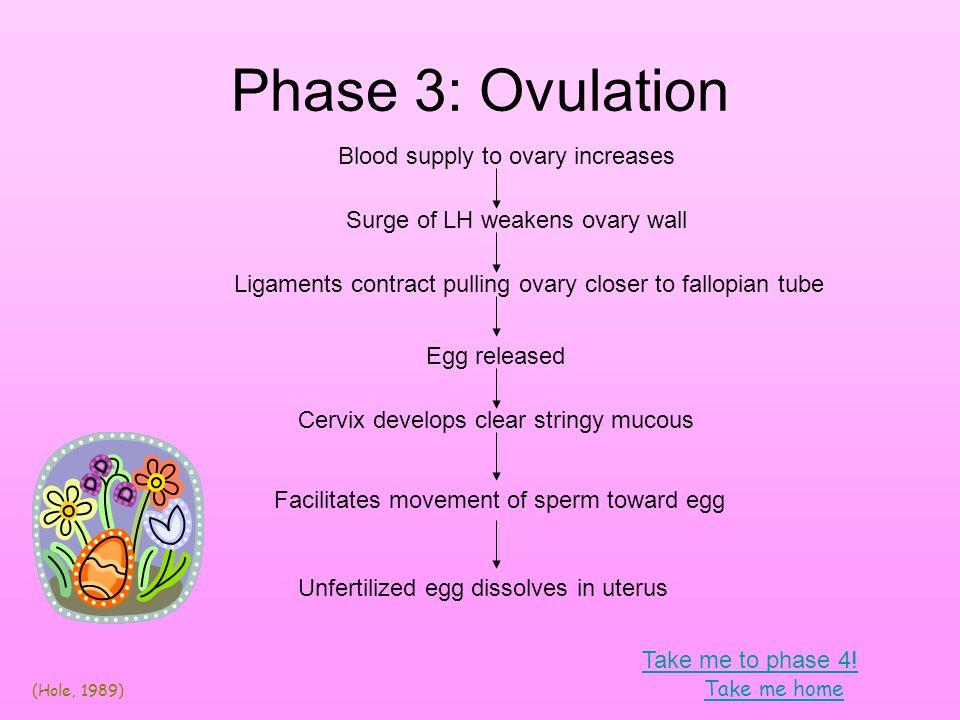 Barbieri, R.L., Erhmann, D. A. (2007) Patient information: Treatment of polycystic ovary syndrome.