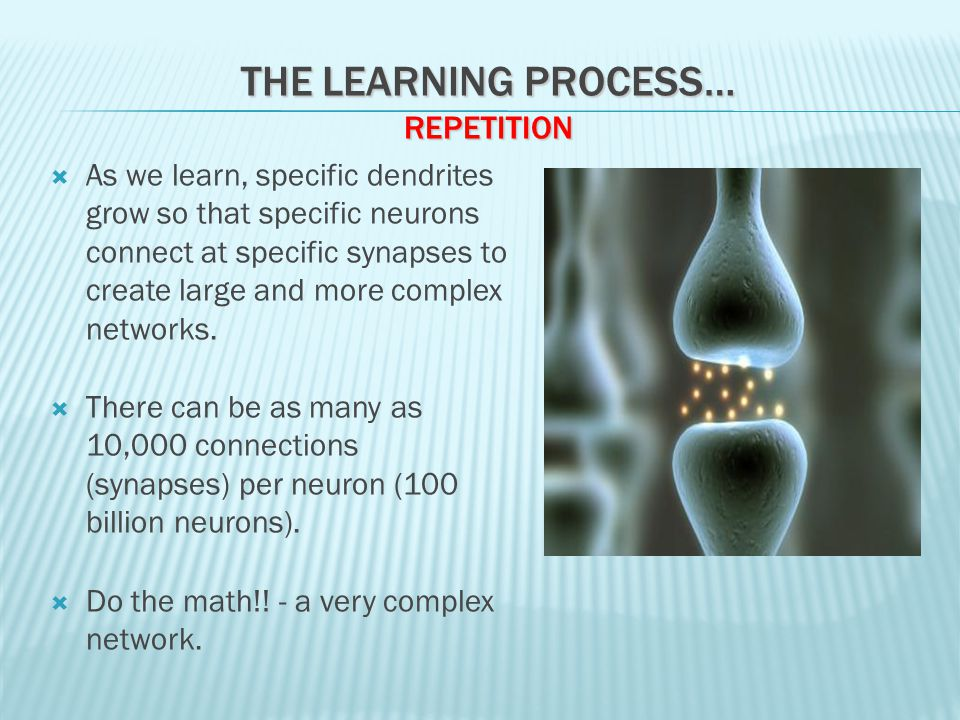 THE LEARNING PROCESS… REPETITION  As we learn, specific dendrites grow so that specific neurons connect at specific synapses to create large and more complex networks.