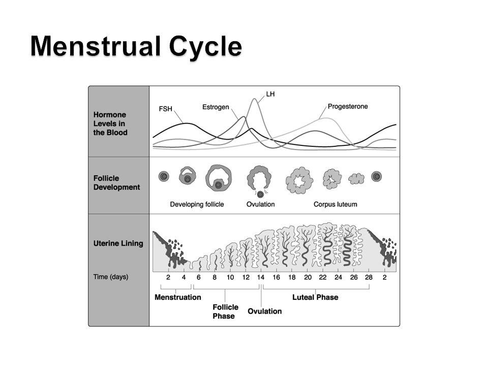 LE 46-9b Vagina Cervix Oviduct Ovaries Uterus Endometrium Follicles Corpus luteum Uterine wall