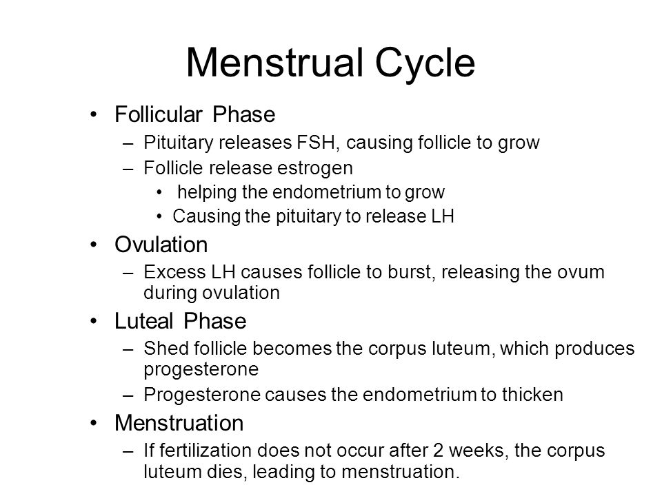 Phase 1: Follicular Phase Anterior Pituitary secretes FSH –stimulates several follicles in the ovaries to grow –Eventually, one of these follicles gains the lead and dominates the others, which soon stop growing During all of this time, the follicle is releasing estrogen –Estrogen helps the uterine lining (endometrium) to grow and eventually causes the pituitary to release a very large amount of LH.