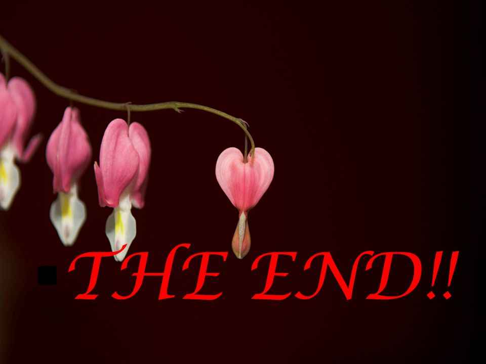  THE END!!
