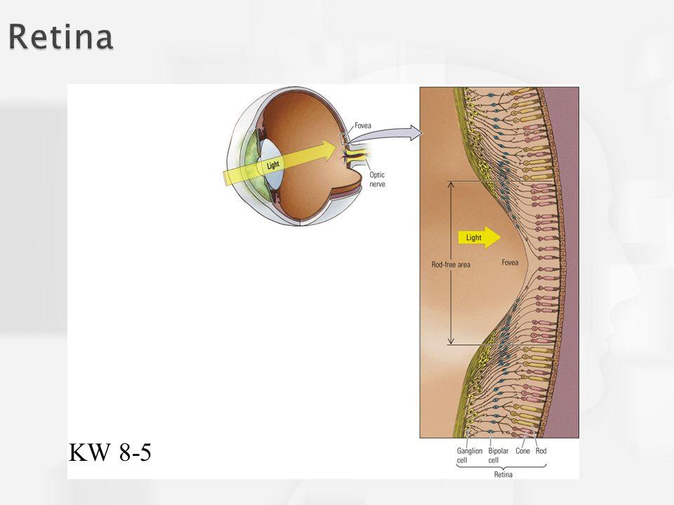 Retina KW 8-5