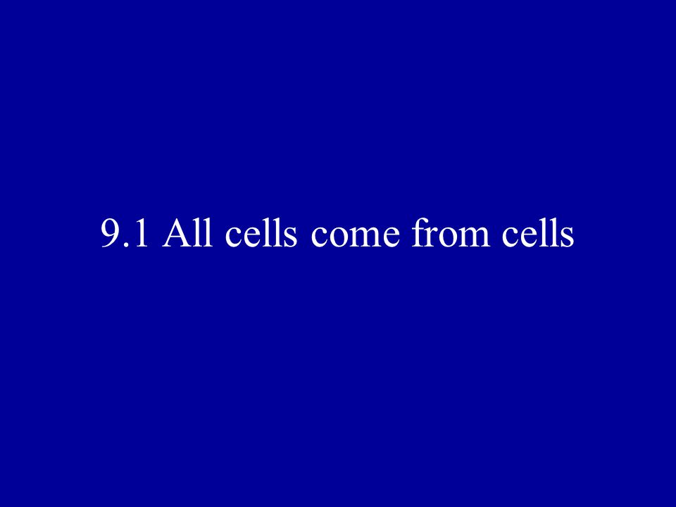 Comparing Cell Division