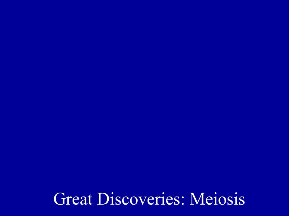 Great Discoveries: Meiosis