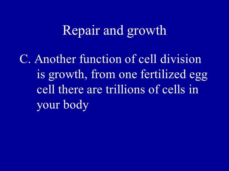 Diploid and haploid cells C.