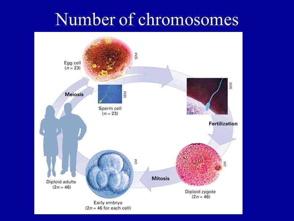 Number of chromosomes