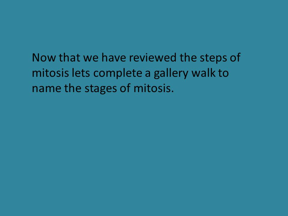 Now that we have reviewed the steps of mitosis lets complete a gallery walk to name the stages of mitosis.