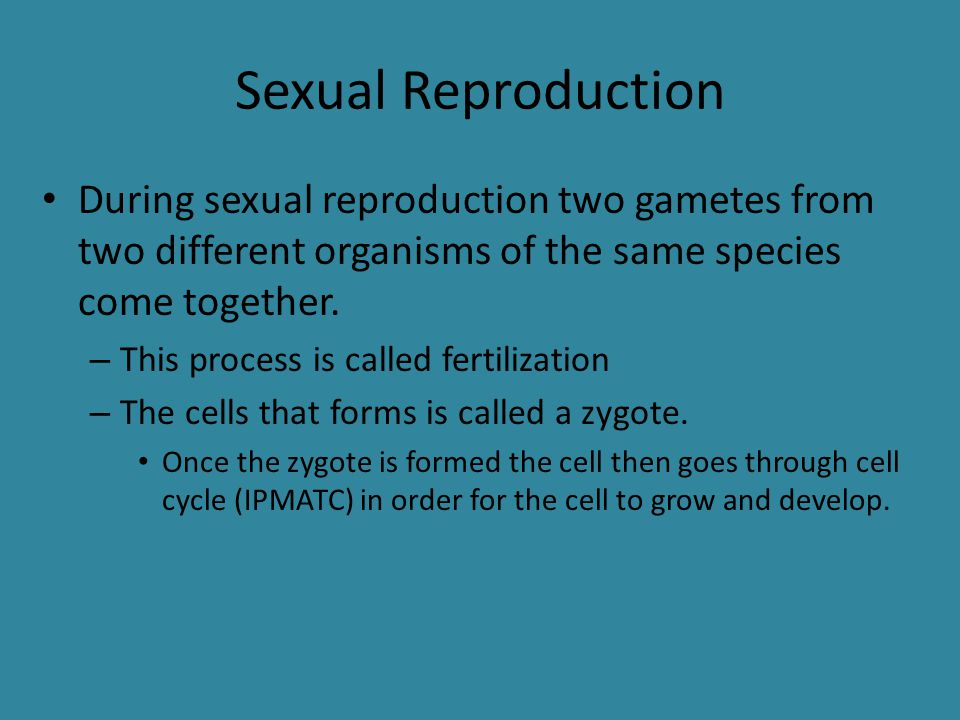 Sexual Reproduction During sexual reproduction two gametes from two different organisms of the same species come together. – This process is called fe