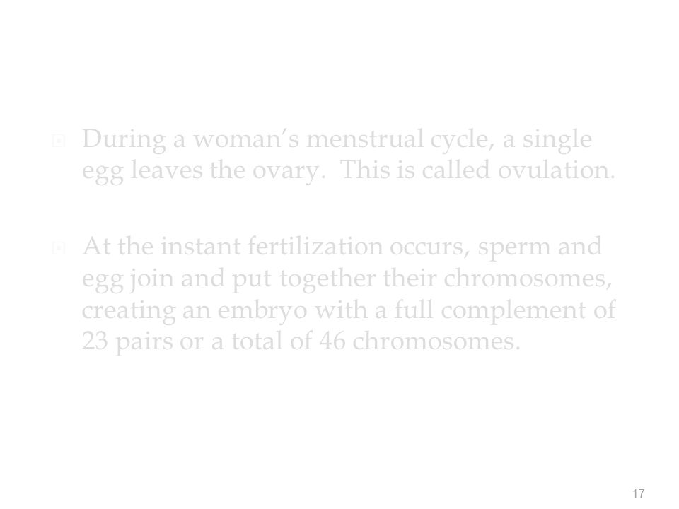 17  During a woman's menstrual cycle, a single egg leaves the ovary.