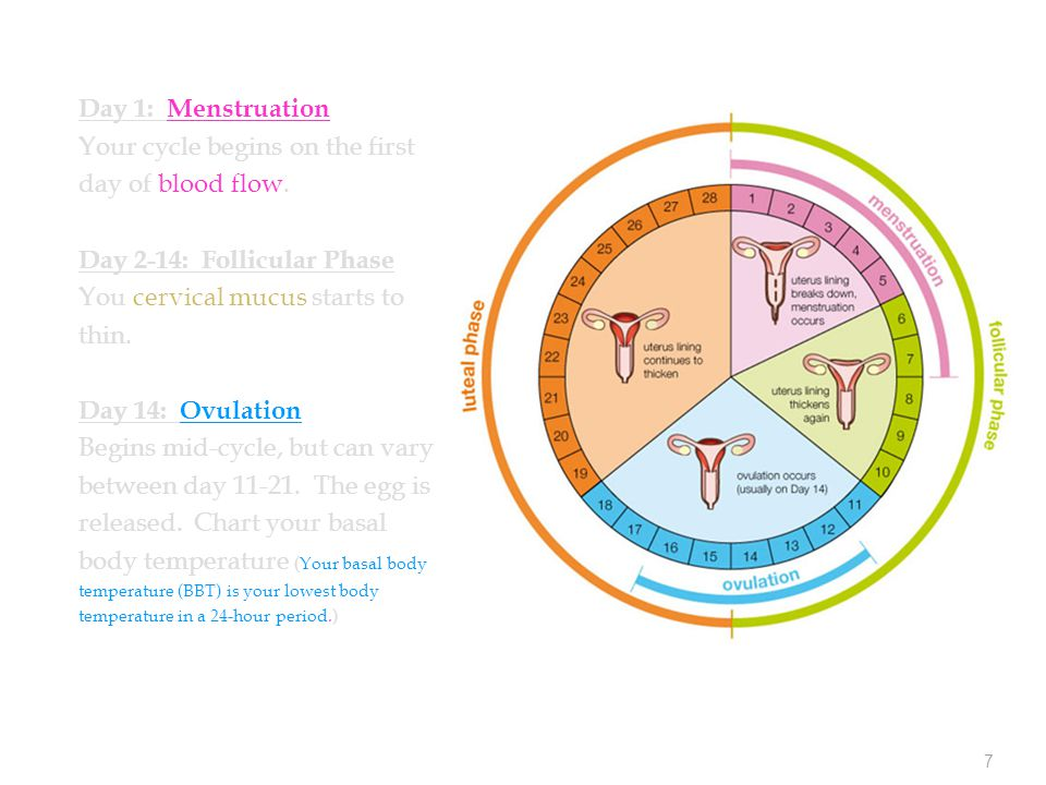 7 Day 1: Menstruation Your cycle begins on the first day of blood flow.