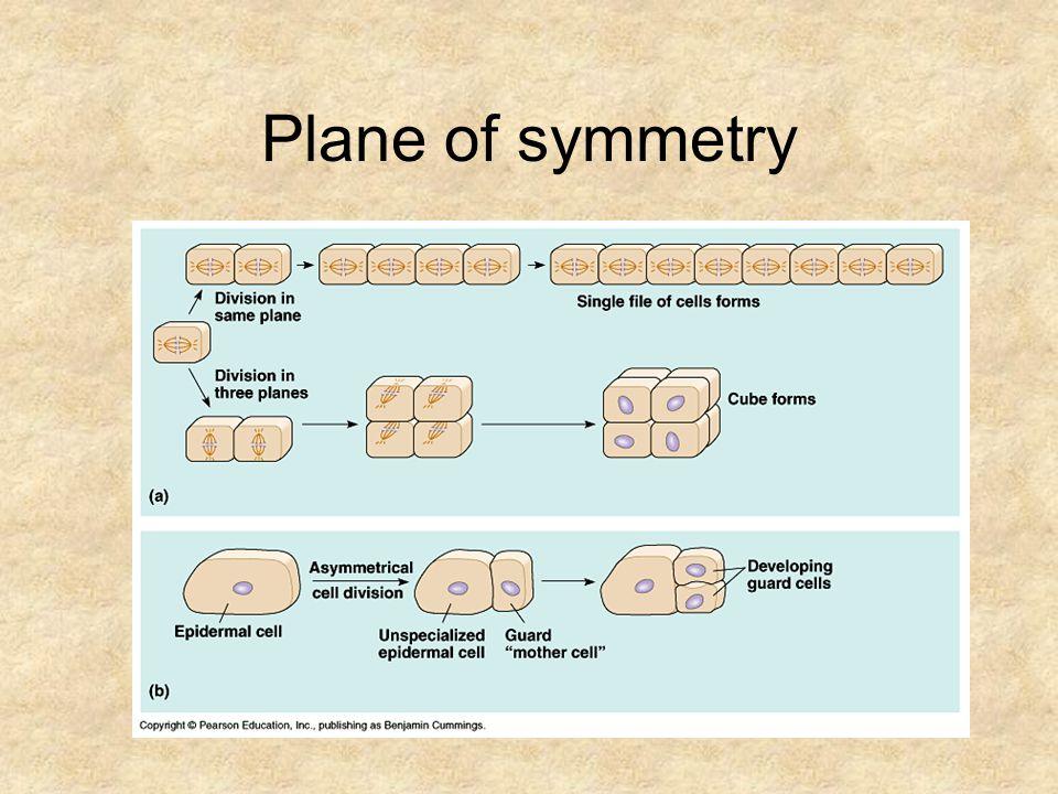 Plane of symmetry