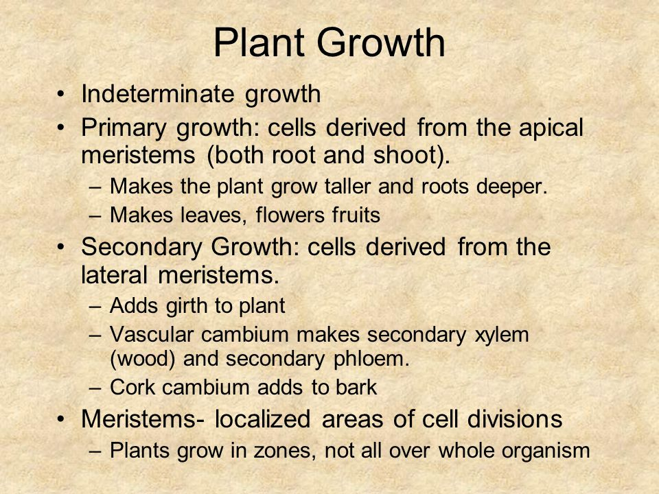 Plant Growth Indeterminate growth Primary growth: cells derived from the apical meristems (both root and shoot).
