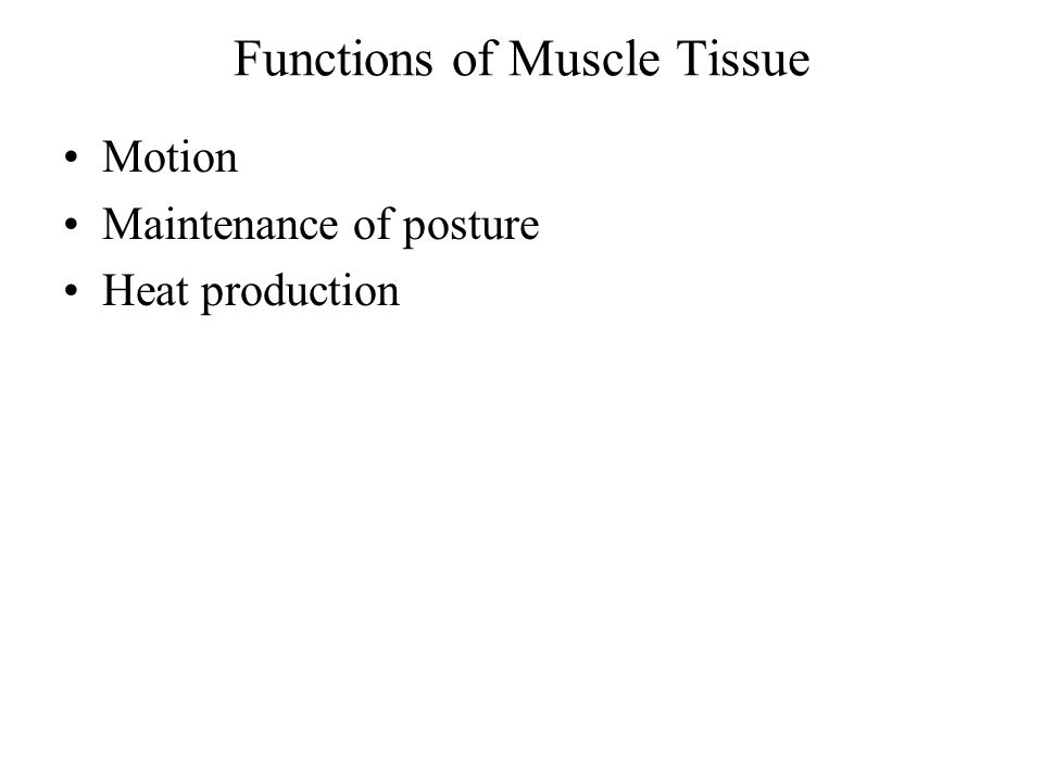 Kinds of Muscle Tissue Skeletal Muscle Cardiac Muscle Smooth Muscle
