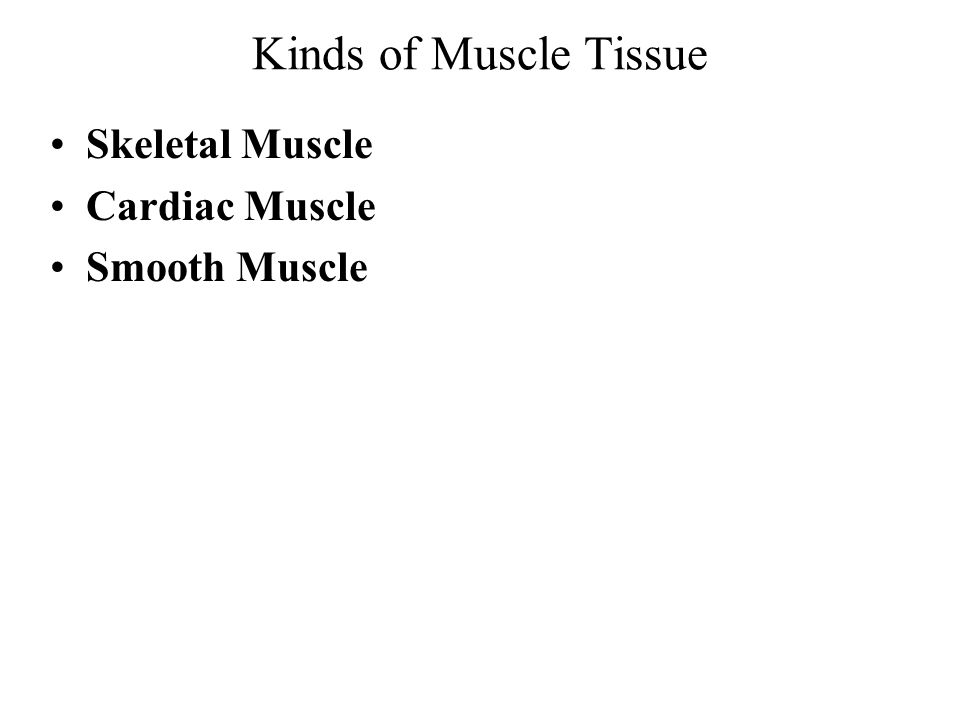 The Muscular System Muscle tissue = all contractile tissue Muscular system = –Skeletal muscle tissue –Connective tissue