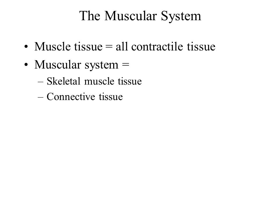 Arrangement of Fasciculi Parallel Convergent Pennate –Unipennate –Bipennate –Multipennate Circular Arrangement is correlated with the power and range of movement of a muscle.