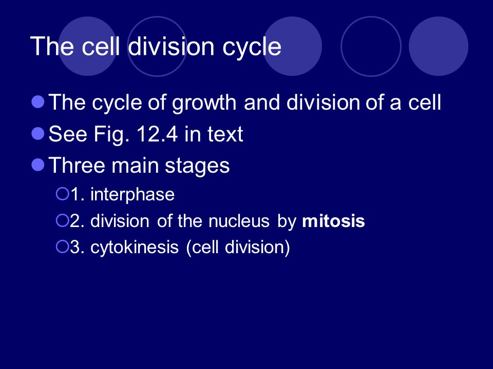 The cell division cycle The cycle of growth and division of a cell See Fig.