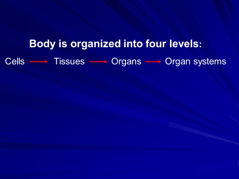 The body contains four large fluid-filled spaces.They house and protect the major internal organs.