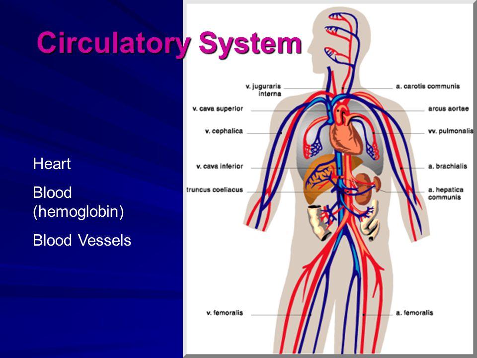 Heart Blood (hemoglobin) Blood Vessels Circulatory System