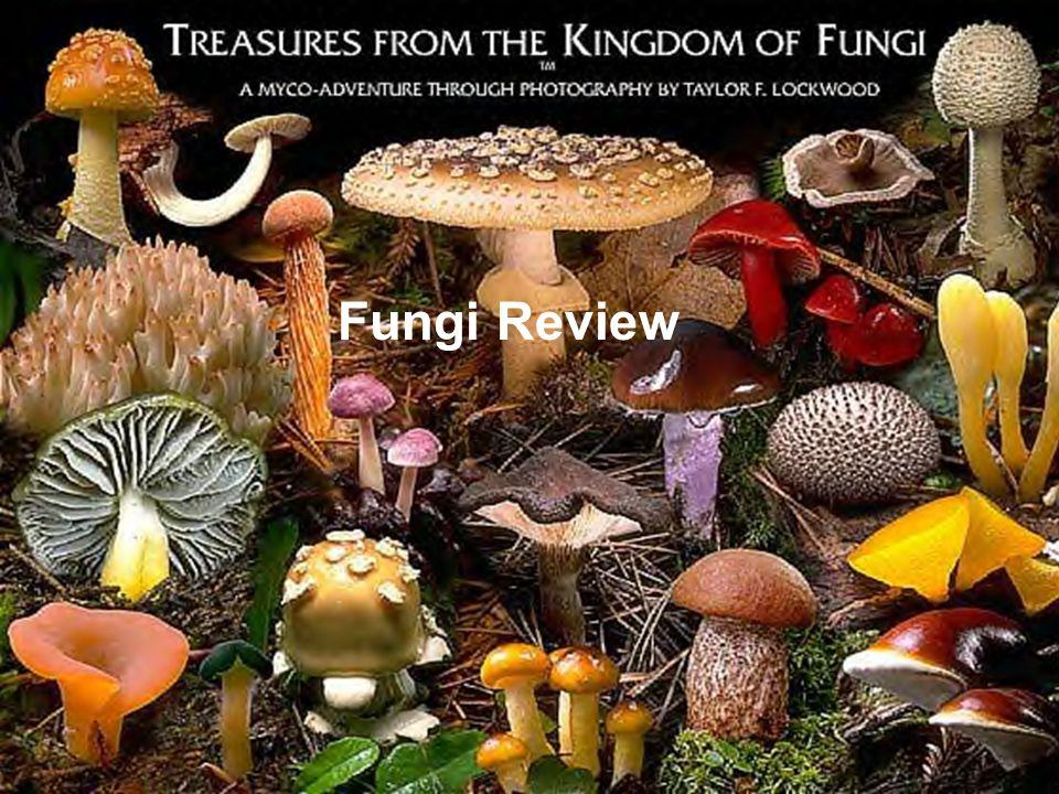 Fungi Review