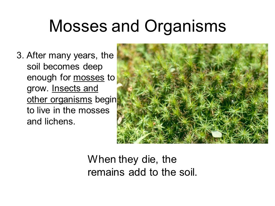 Mosses and Organisms 3.After many years, the soil becomes deep enough for mosses to grow.