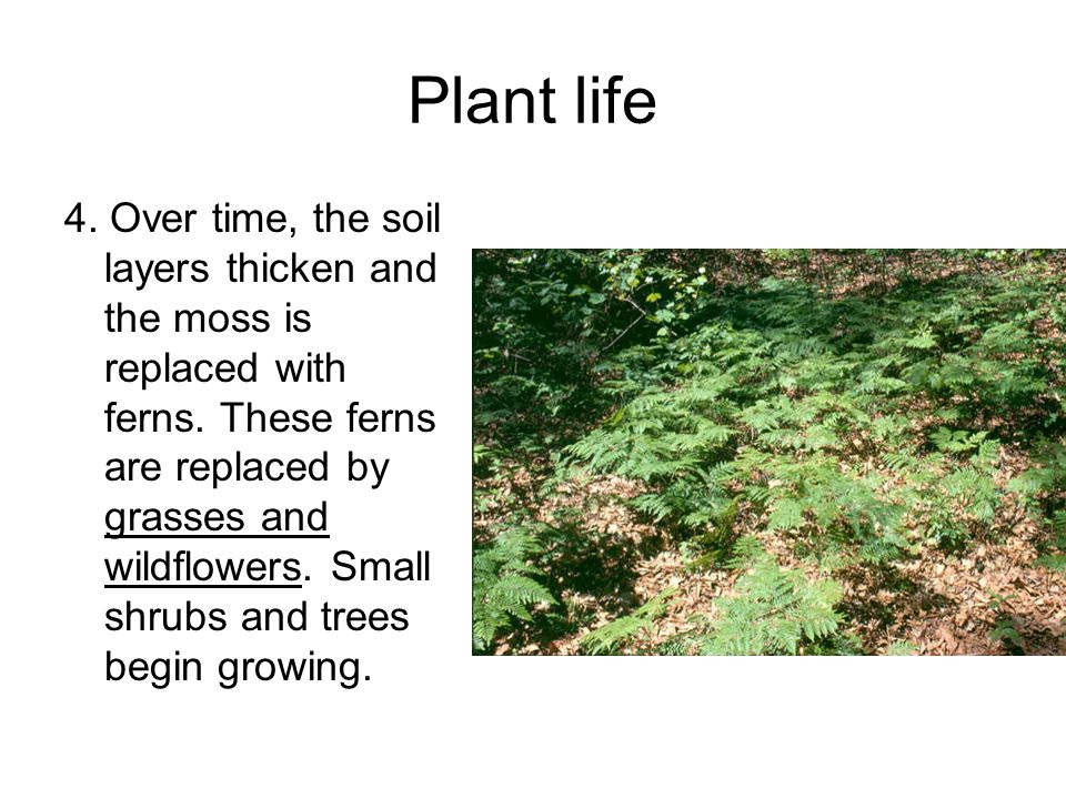 Plant life 4. Over time, the soil layers thicken and the moss is replaced with ferns.