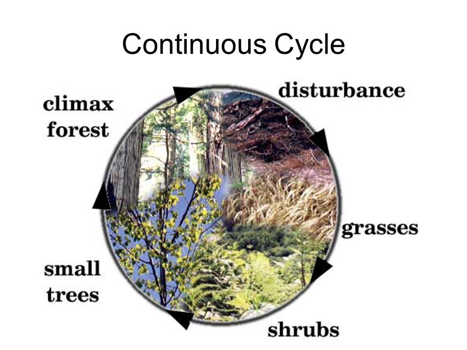 Continuous Cycle