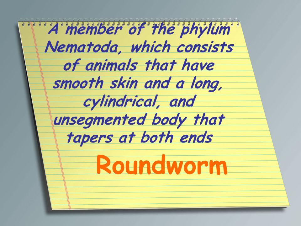 A member of the phylum Nematoda, which consists of animals that have smooth skin and a long, cylindrical, and unsegmented body that tapers at both ends Roundworm