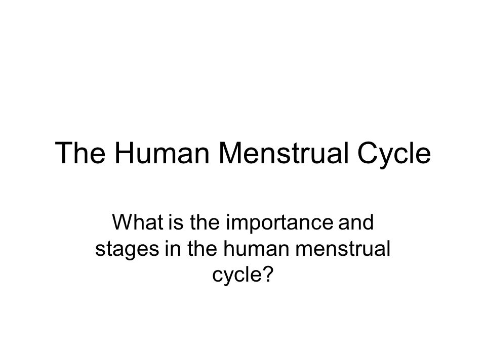 The Human Menstrual Cycle What is the importance and stages in the human menstrual cycle