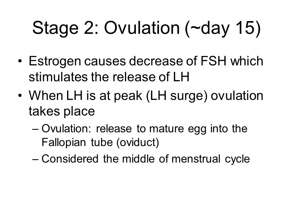Stage 2: Ovulation (~day 15) Estrogen causes decrease of FSH which stimulates the release of LH When LH is at peak (LH surge) ovulation takes place –Ovulation: release to mature egg into the Fallopian tube (oviduct) –Considered the middle of menstrual cycle