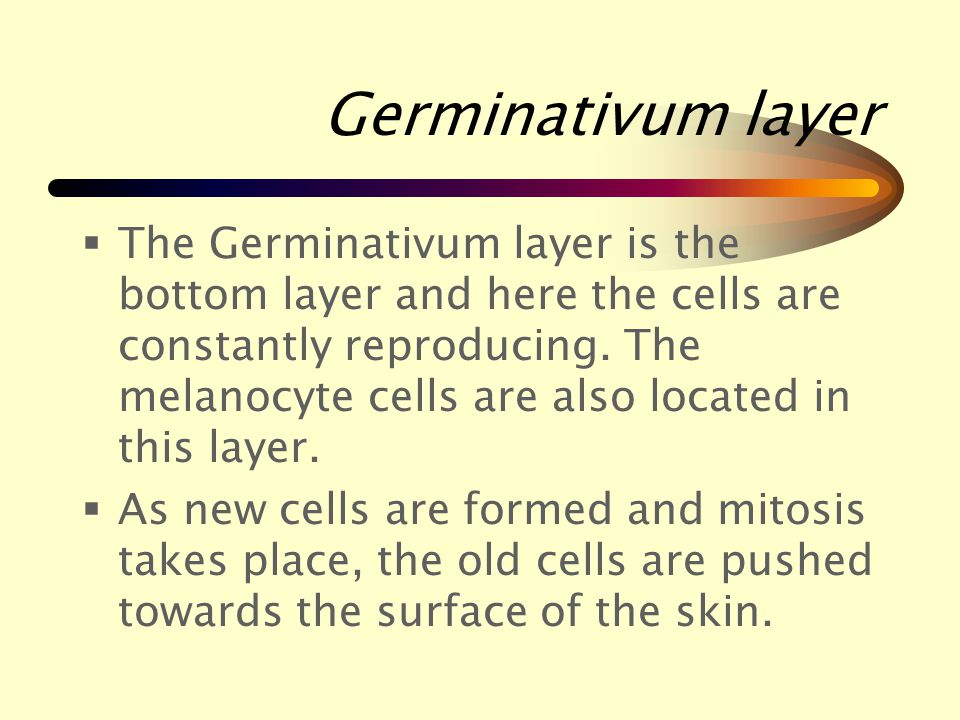 The Epidermis The epidermis is the outer or top layer and is made up of five sub layers.