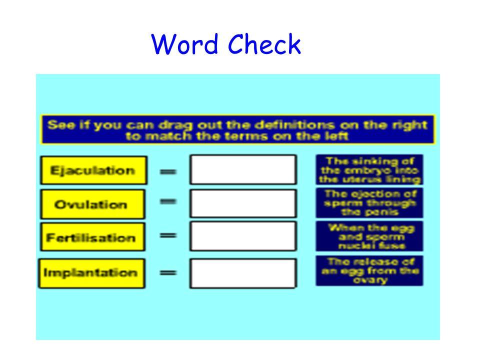 Word Check