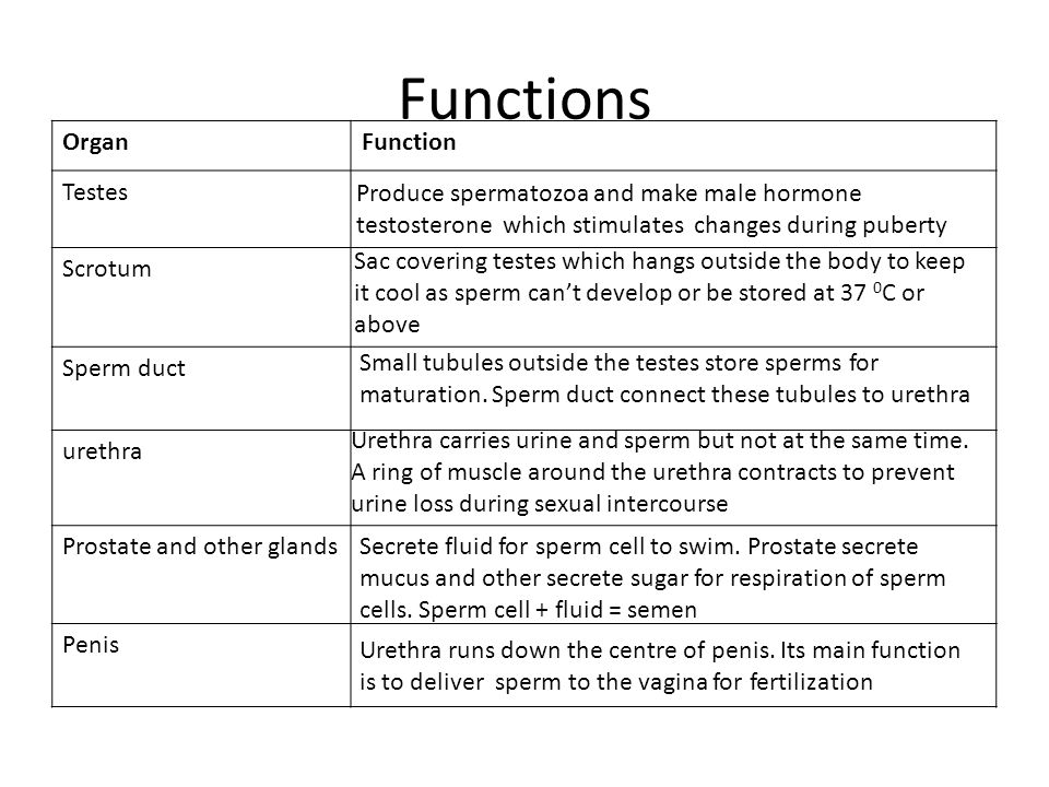 Functions OrganFunction Testes Scrotum Sperm duct urethra Prostate and other glands Penis Produce spermatozoa and make male hormone testosterone which