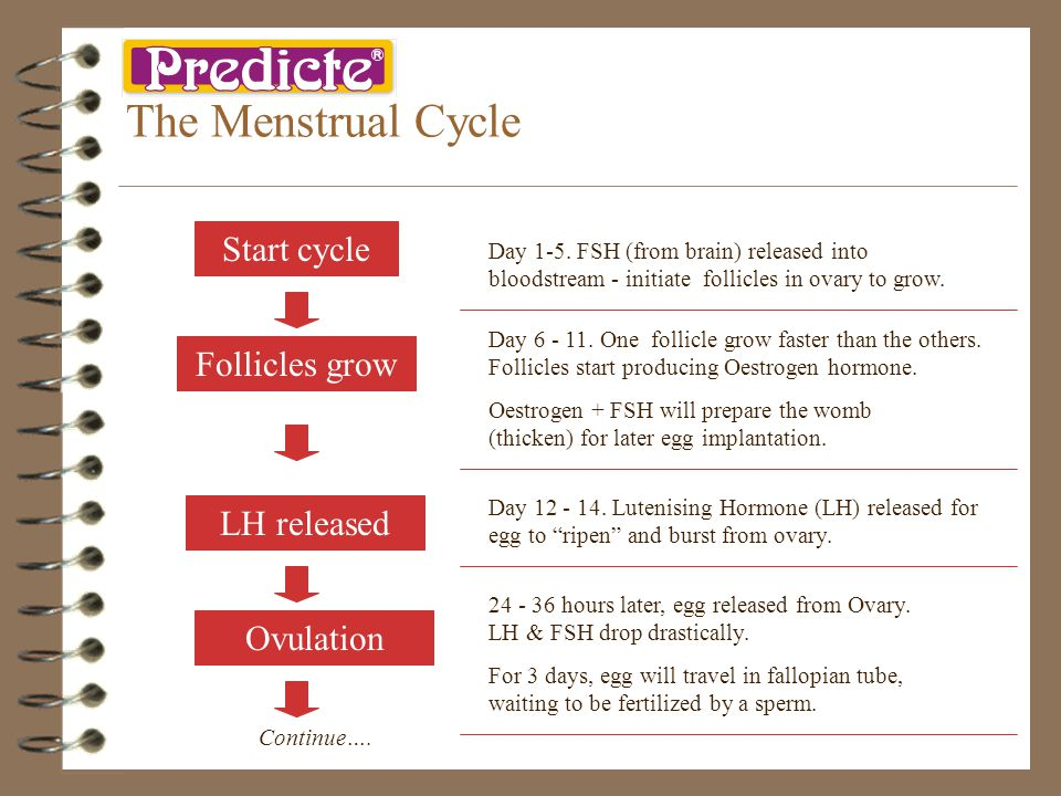 The Menstrual Cycle Start cycle Day 1-5.