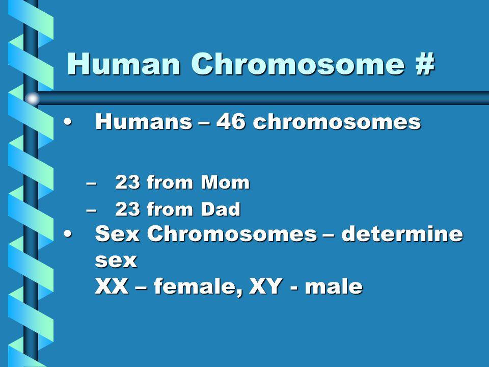 Chromosome number Homologous chromosomes – similar is size, shape, genetic content.Homologous chromosomes – similar is size, shape, genetic content.
