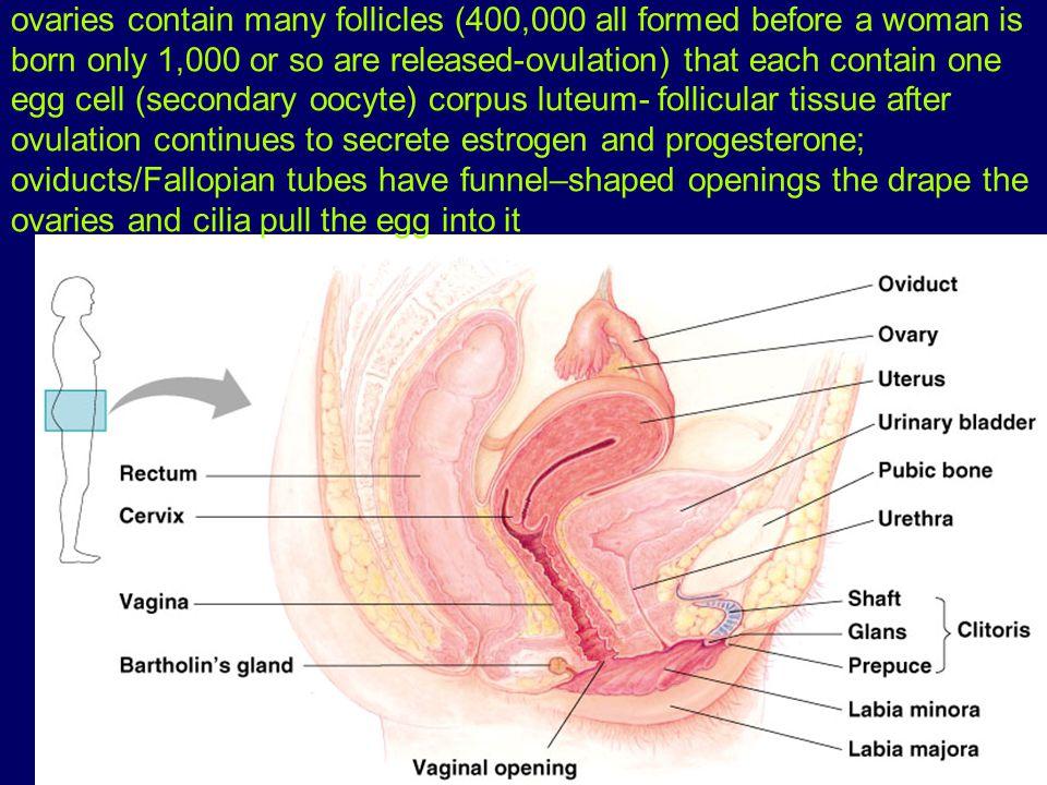 Hypothalamus monitors levels of estrogen and progesterone in blood.