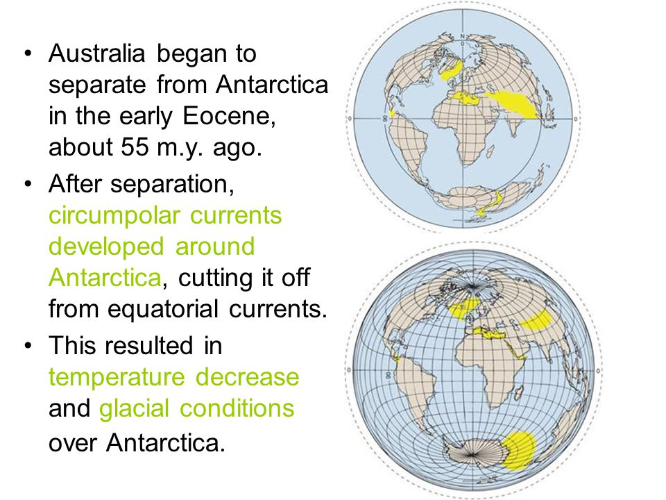 Australia began to separate from Antarctica in the early Eocene, about 55 m.y. ago. After separation, circumpolar currents developed around Antarctica
