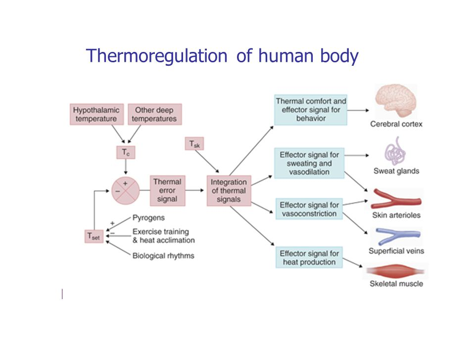 Thermoregulation of human body