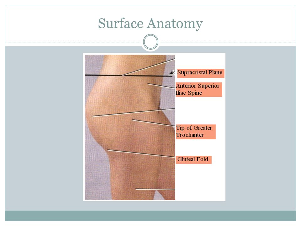 Bursae: small fluid filled pockets located in connective tissue.